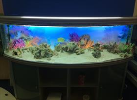 Чистка и запуск мертвого аквариума в офисе. 615л.